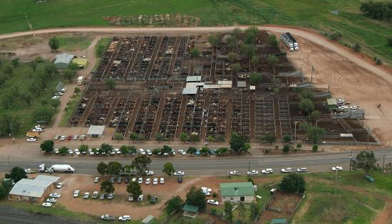 Gunnedah Saleyards